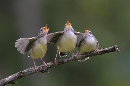 pest-control-for-birds