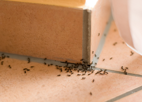 reasons-to-remove-common-pests-at-home